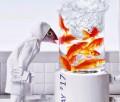 Kreasi Unik Dari Kepala Ikan (Pic)