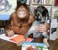 Persahabatan Unik Orang Utan Dengan Anjing